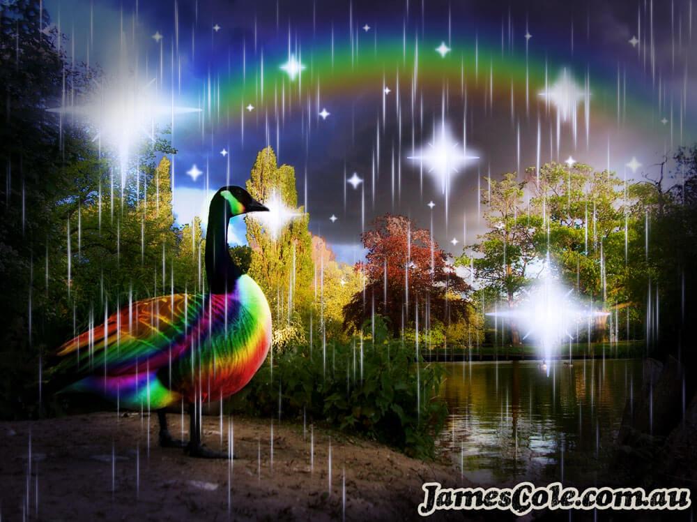 Mystic Duck