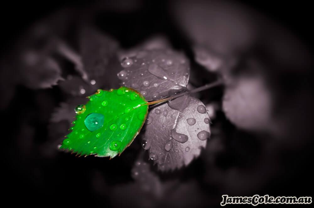 Precious - Digital Art by James Cole