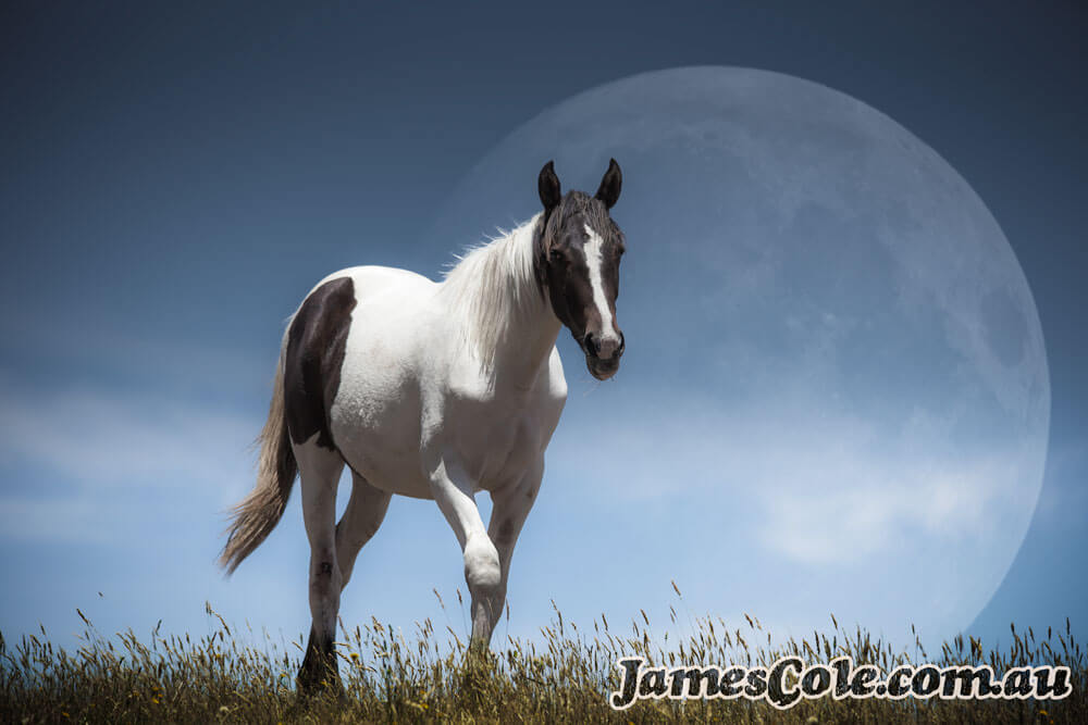 Lunar Horse - Fantasy Artwork by James Cole