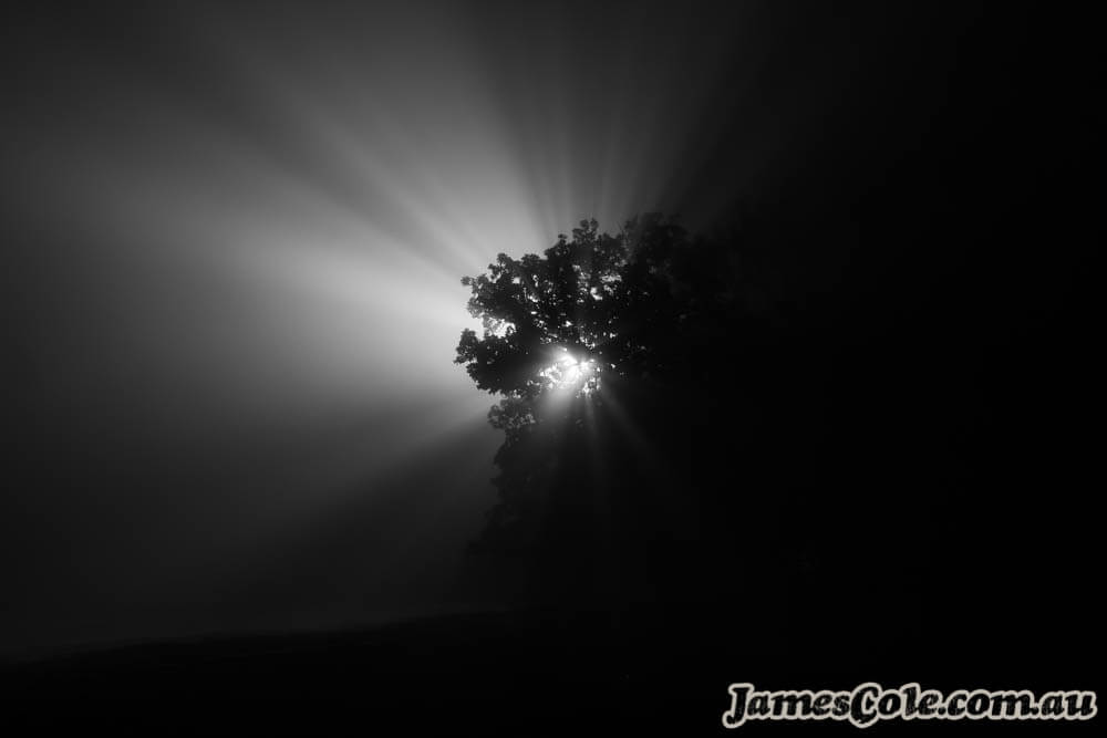 Ray of Tree