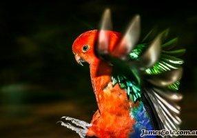 Flight of Colour 2018 - Bird Photography
