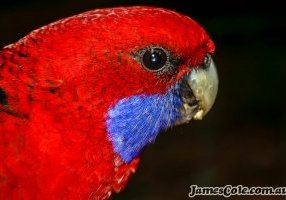 Here's lookin' at ya - Bird Photography by James Cole