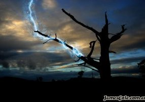 Plasma Tree - Fantasy Art by James Cole